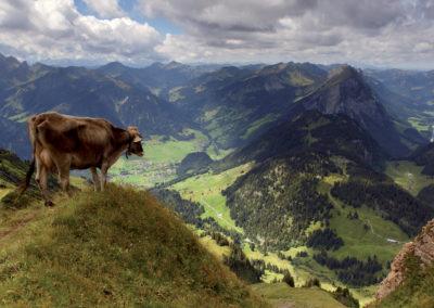 994_Auf dem Diedamskopf/Bregenzerwald